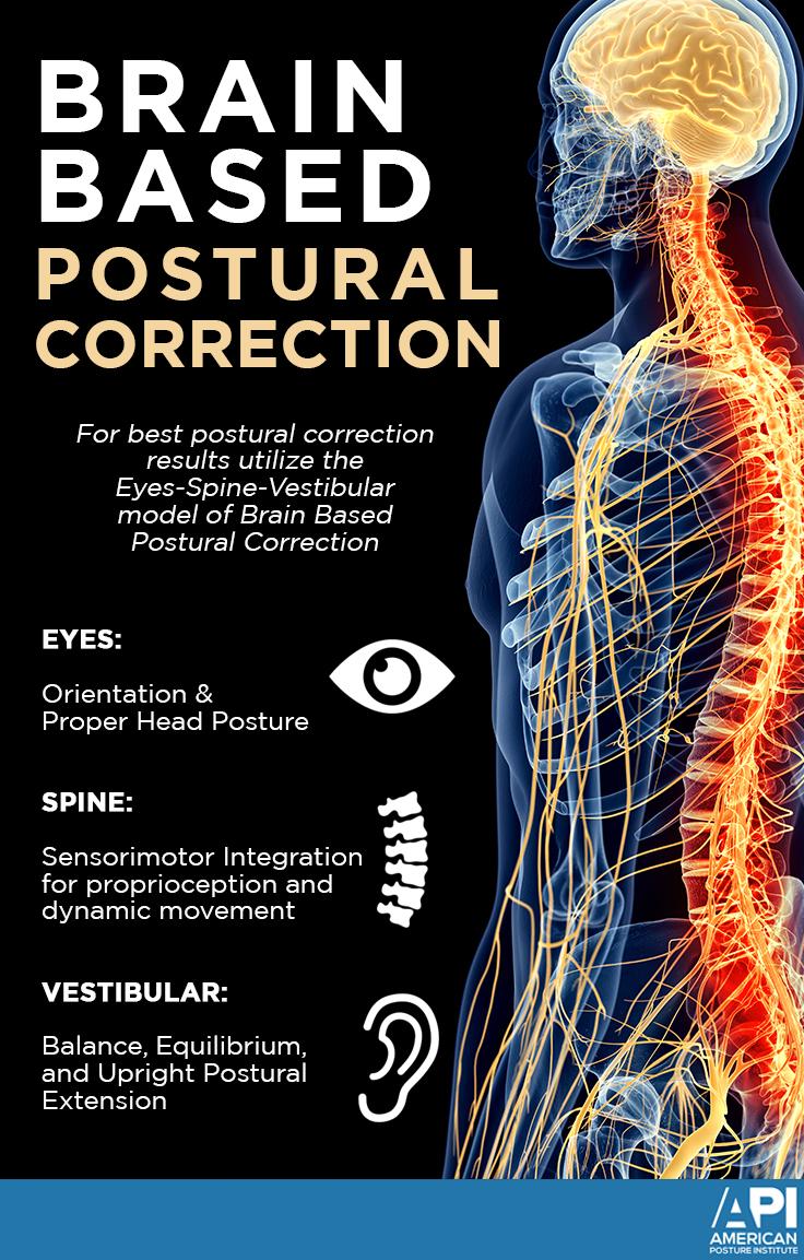 Brain Based Postural Correction