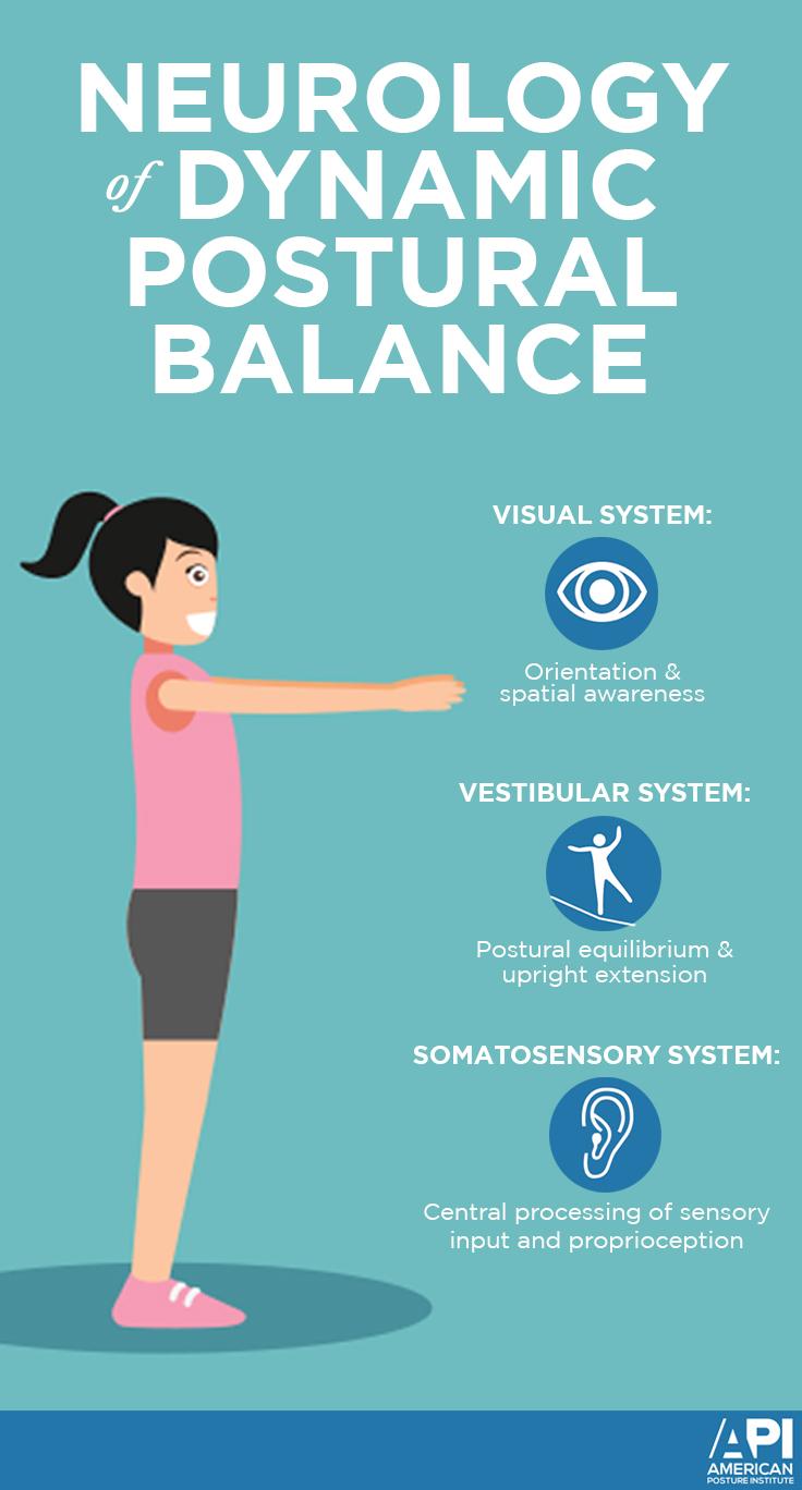Neurology of Dynamic Postural Balance